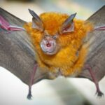 El SARS-COV-2 lleva décadas circulando indetectado entre los murciélagos, según el nuevo estudio