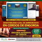 Videoconferencia: Digestibilidad Ileal de Aminoácidos en Cerdos de Engorda