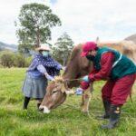 Aretado de Ganado Bovino en Beneficio de la Ganadería Familiar de Perú