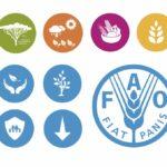 Según la FAO en el 2050 Consumir Carne de Res será un Lujo