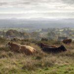Dietas Alternativas ante una Sequía para Bovinos de Carne