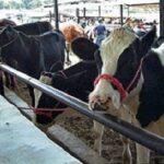 En México el Sector Agropecuario se encuentra a punto de Colpasar