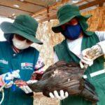 MINAGRI vacuna a más de 159 mil aves contra la enfermedad de Newcastle