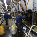 La industria de la leche en EE. UU. se mantiene creciente pese al Covid - 19