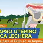 Videoconferencia: Prolapso Uterino en Vaca Lechera