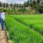 INIA Potencia Trabajos de Tecnología Agraria para Impulsar Ganadería de Amazonas