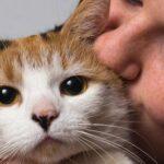 Investigadores de Chile comprueban el contagio de COVID-19 de humanos a animales
