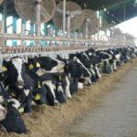 Afirman que la Argentina está en condiciones de aumentar fuertemente la exportación de leche