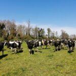 INIA Chile e INFOR Iniciarán Proyecto para la Generación de Sistemas Productivos Agropecuarios Carbono Neutrales