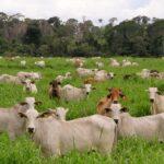 Como influye el Calor en la productividad y el bienestar animal