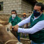 SENASA inició identificación de animales de abasto en beneficio de la ganadería familiar de Junín