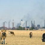 El Calentamiento Global y la Ganadería