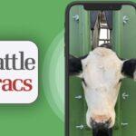 EE. UU. trabajan en aplicación que utiliza reconocimiento facial en vacas
