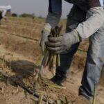 Midagri: Actividades Agropecuarias se Realizarán con Normalidad Durante Cuarentena