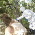 Sistema de trazabilidad animal permitirá controlar enfermedades de importancia económica en el sector pecuario