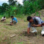 Perú impulsa manejo forestal sostenible y responsable de los bosques