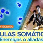 Células Somáticas en Leche: ¿Enemigas o Aliadas?