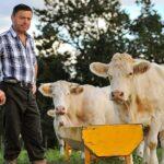Ganaderos Peruanos Sacrificarán 2000 Vacas por los Elevados Costos para Mantenerlas debido a la Crisis Económica