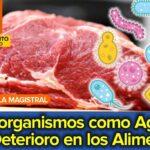 Microorganismos como Agentes de Deterioro en los Alimentos
