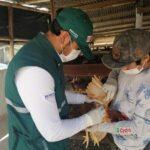 SENASA monitorea condición sanitaria de aves en Arequipa
