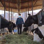 Leche Gloria apoyará a sus socios ganaderos ante el incremento internacional del precio de alimentos para el ganado