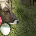 Aportes Nutricionales de Carne y Leche de Ganado Alimentado con Pasto serían Mayores