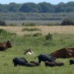 Crean Protocolo para Reducir Riesgos de Transmisión de Patógenos entre Fauna Silvestre y Ganado
