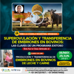 Videoconferencia: Superovulación y transferencia de embriones: Las claves de un programa exitoso