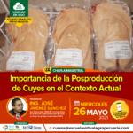Webinar Gratuito: Importancia de la Posproducción de Cuyes en el Contexto Actual