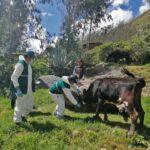 Senasa realiza campaña de vacunación de ganado para prevenir la Rabia de los herbívoros