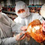 """Primer contagio humano gripe aviar H10N3: """"No hay que alarmarse, pero tampoco bajar la guardia"""""""
