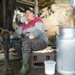 Sector Lácteo Colombiano Busca Estrategia para Elevar su Productividad
