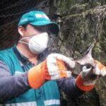 SENASA ejecuta plan piloto para la prevención y control de la rabia en el ganado