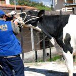 Gobierno Implementa Programa para Reactivación del Sector Ganadero Lechero