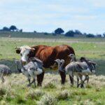 Uruguay le Apuesta a la Recuperación de sus Pastizales