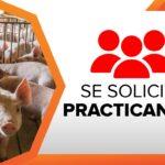 San Bernardo SAC Solicita Practicantes para Planta de Alimento Balanceado
