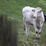 Consejos para un manejo adecuado del ganado durante el verano