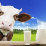 El Sistema Digestivo de las Vacas Influye en la de Vitamina B12 que Consumen las Personas