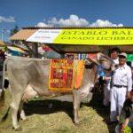 Establo lechero ubicado en Chincha requiere: INSEMINADOR – SANITARIO Y TERNERERO