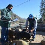SENASA Evaluó Condición Sanitaria de Animales en Feria Ganadera de Challhua - Perú