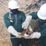 Ganadería familiar de Apurímac se Beneficia con Plan Piloto para el Control de Rabia de los herbívoros