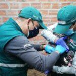 Senasa Realiza Estudio Epidemiológico para Descarte de Influenza Aviar