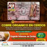 MASTER CLASS: Cobre Orgánico en Cerdos