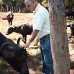 Crece en Argentina la Cría de Búfalos para la Elaboración de Productos Gourmet