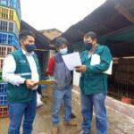 SENASA inicia fiscalización de prácticas de higiene en centros de faenamiento de aves